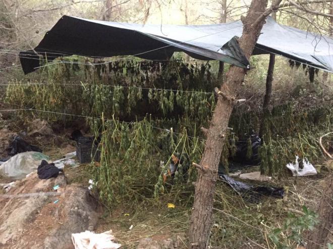 Μεγάλη επιτυχία των ανδρών της Ασφάλειας Πατρών: Εντόπισαν μεγάλη φυτεία κάνναβης στην Αττική - Πάνω από 1,7 εκατ. ευρώ το περιουσιακό όφελος - Σύλληψη 2 ατόμων (Photos)