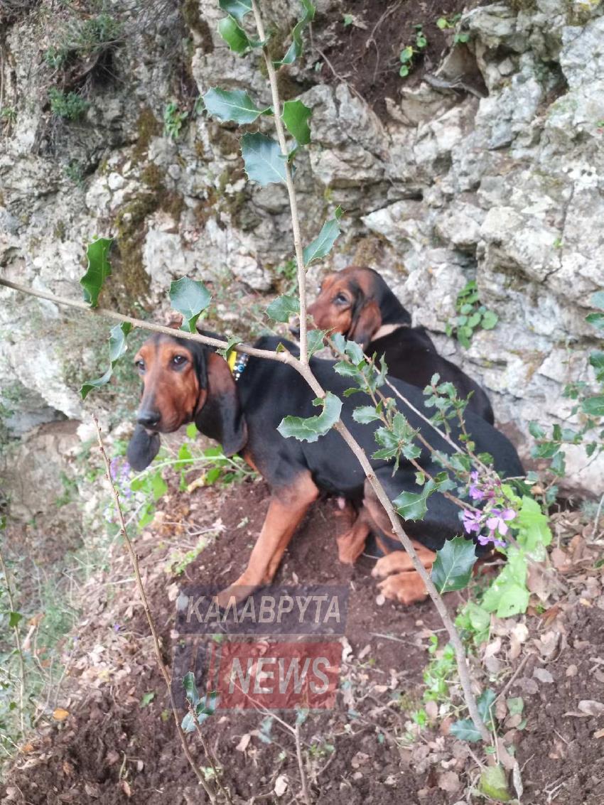 Αχαΐα: Εντυπωσιακή επιχείρηση από την Π.Υ. Καλαβρύτων διάσωσης δύο κυνηγετικών σκύλων – Πως βρέθηκαν σε πλαγιά 70 μέτρων! (photos)