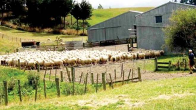 Αποτέλεσμα εικόνας για Ανάστατοι οι κτηνοτρόφοι στα Καλάβρυτα μετά την απόφαση του Δήμου για τέλη στους στάβλους»